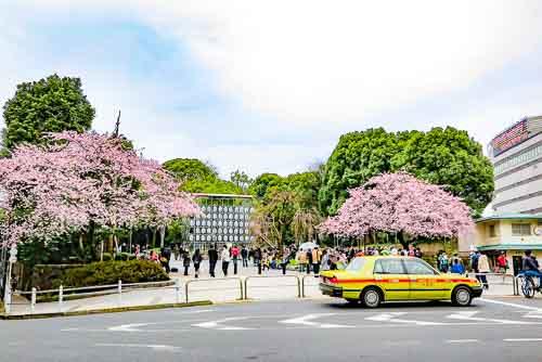 Ueno Park jadi salah satu tempat favorit melihat Sakura (Picture from japanvisitor.com)