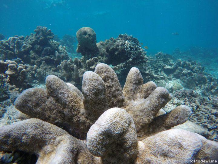 Melihat Keindahan Alam Bawah Laut Gili Trawangan